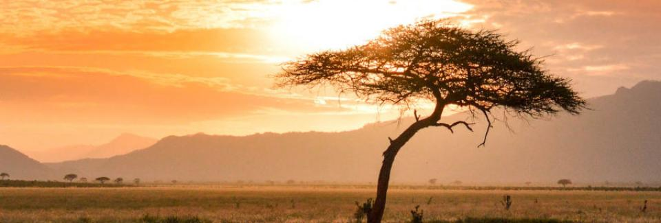 african tree sunset